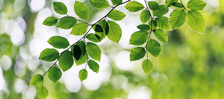 Compliance Ambiental e os Reflexos das Decisões do STF